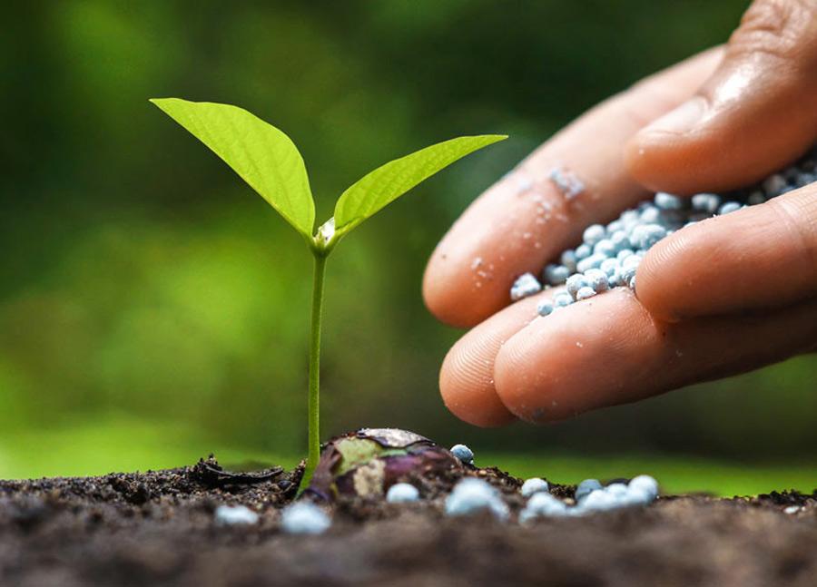 vegetable-gardening-fertilizer